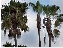 What Palm Tree Removal Services Can Do For Your Property